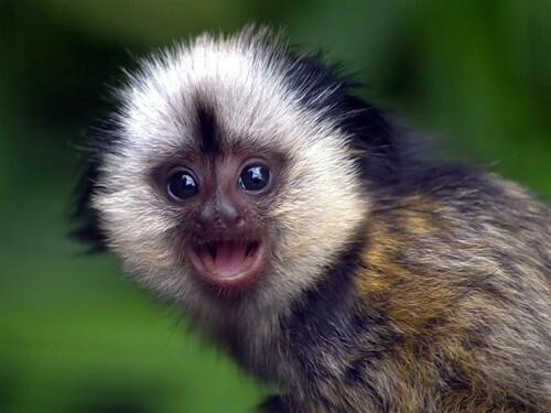 International Monkey Day