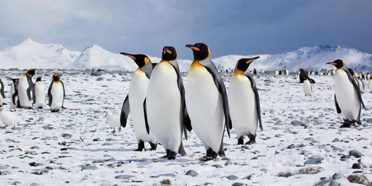 Penguin Awareness Day 2018 - January 20