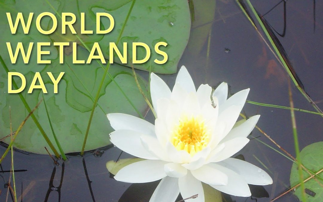 World Wetlands Day – February 2, 2019