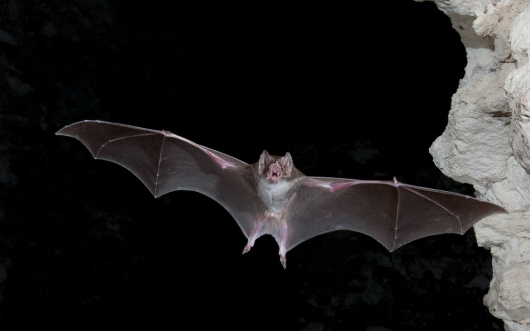 International Bat Night – August 27, 2019