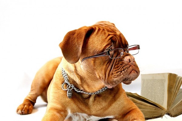 Work Like a Dog Day - August 5