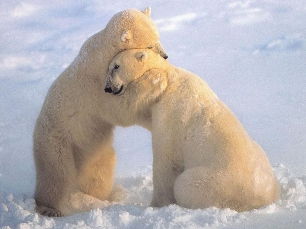 National Hug a Bear Day