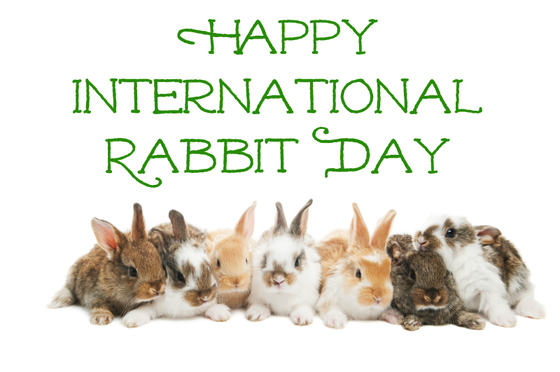 International Rabbit Day – September 22, 2018