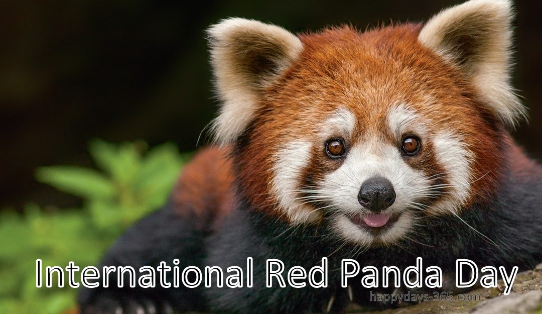 International Red Panda Day – September 15, 2018