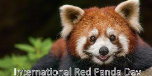 International Red Panda Day