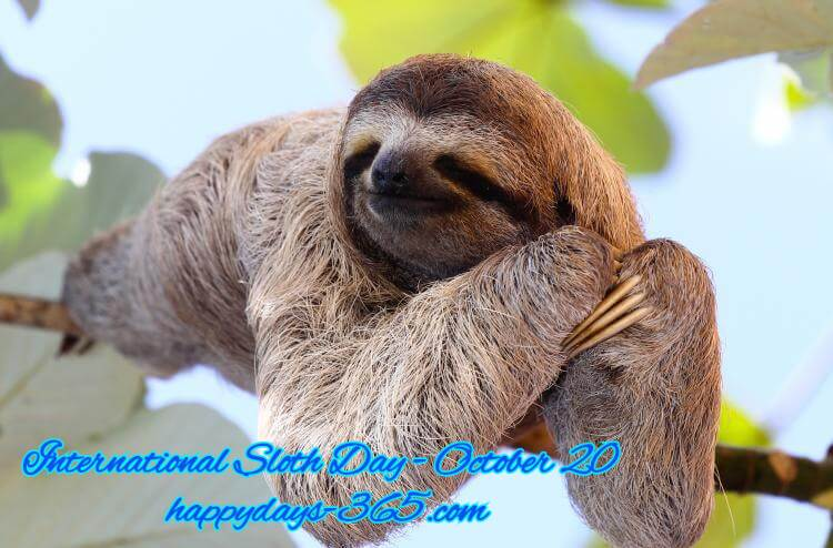 International Sloth Day – October 20, 2019
