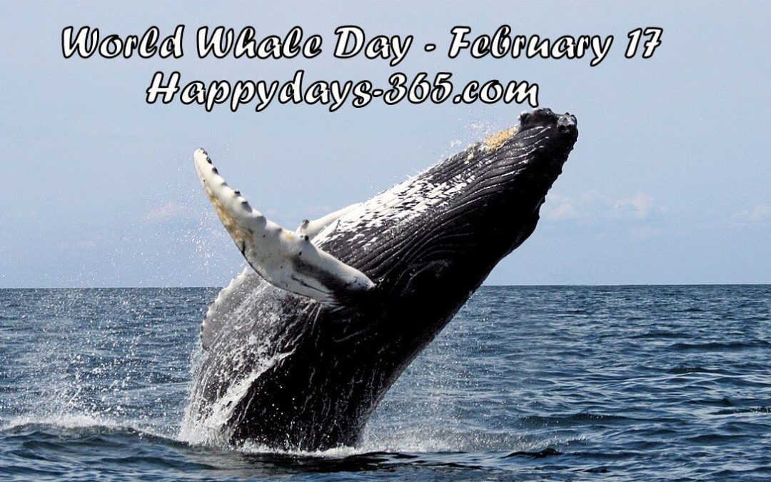 World Whale Day – February 17, 2018