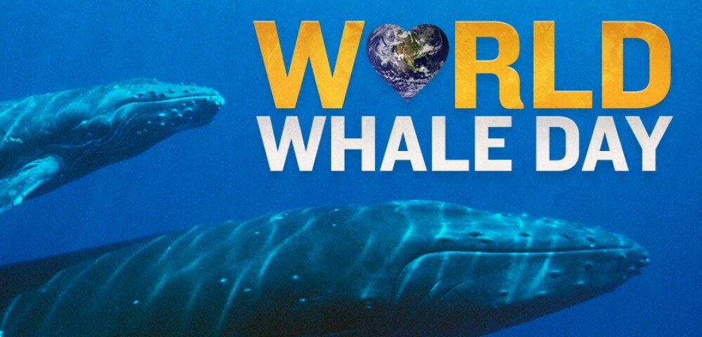 World Whale Day 2018 - February 17