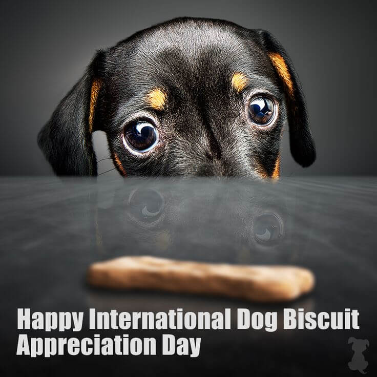 International Dog Biscuit Appreciation Day