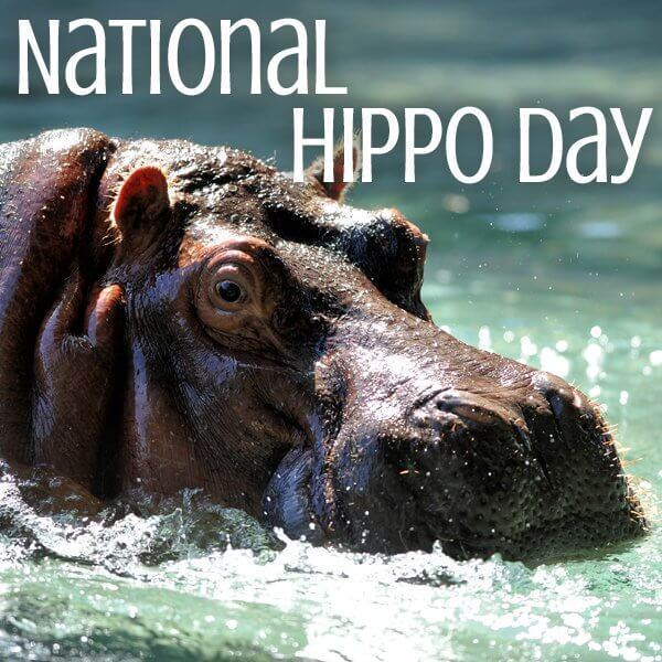 National Hippo Day 2018 - February 15