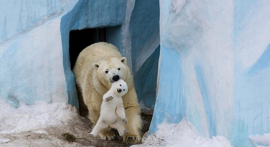 International Polar Bear Day – February 27, 2021