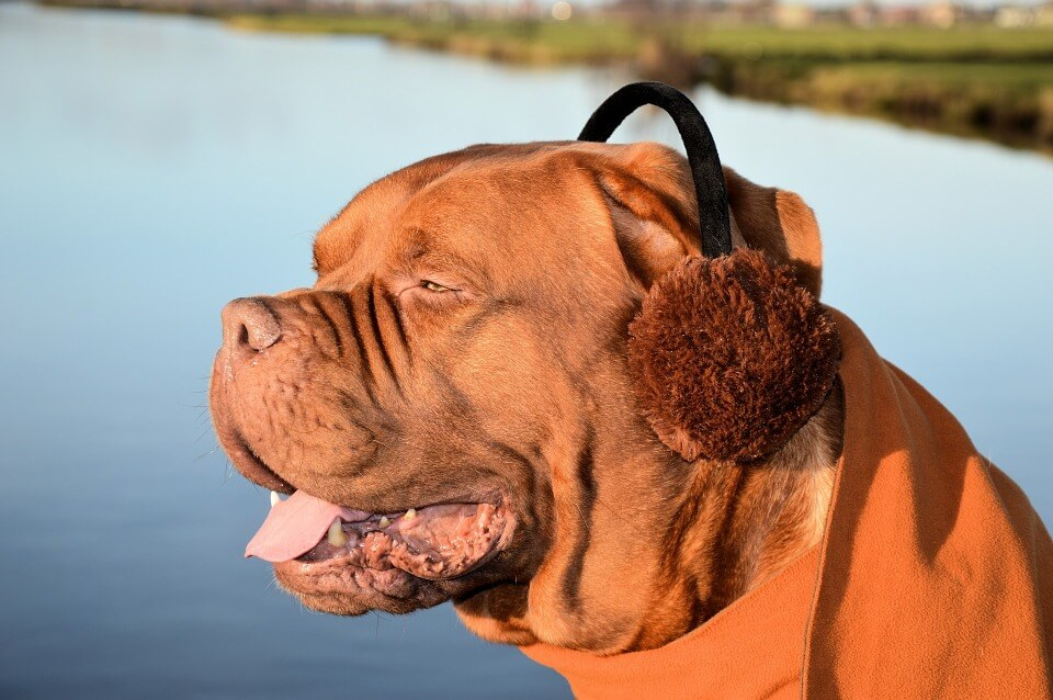 National Earmuff Day 2018 - March 13
