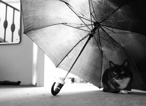National Open An Umbrella Indoors Day 2018 - March 13