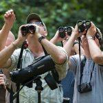 National Go Birding Day