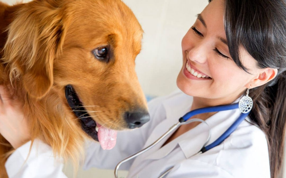World Veterinary Day