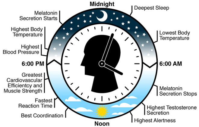 National Biological Clock Day