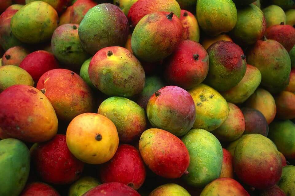 National Mango Day