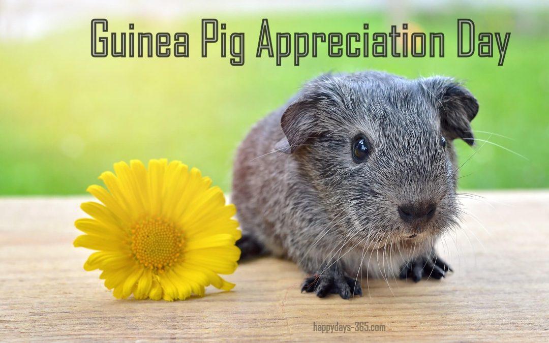 Guinea Pig Appreciation Day – July 16, 2019