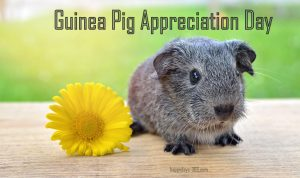 Guinea Pig Appreciation Day
