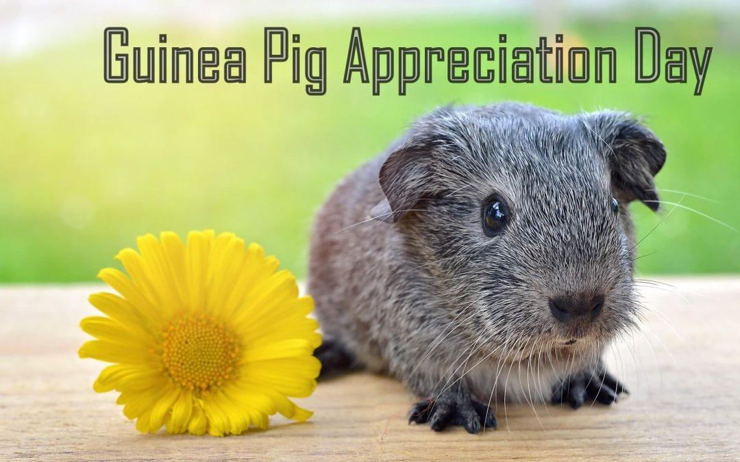 Guinea Pig Appreciation Day – July 16, 2021