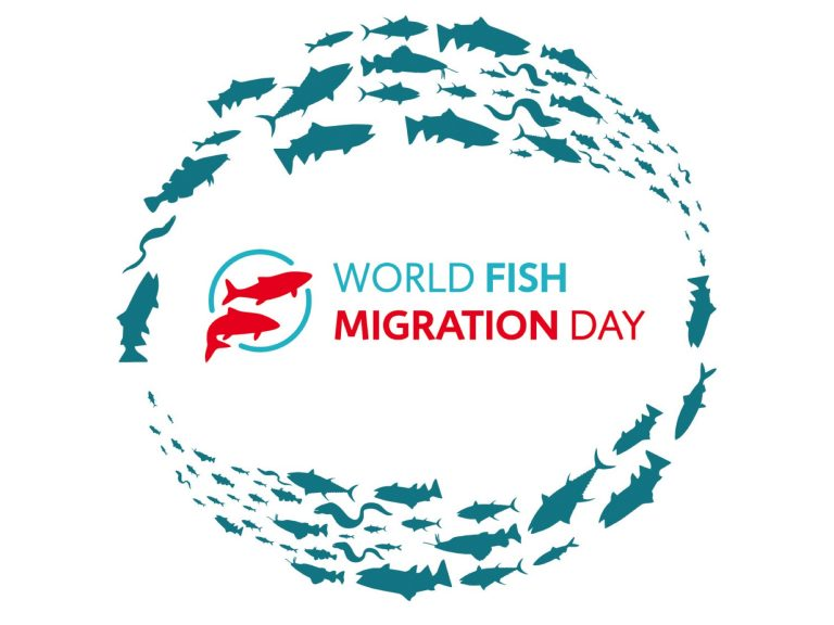 World Fish Migration Day – April 21, 2021