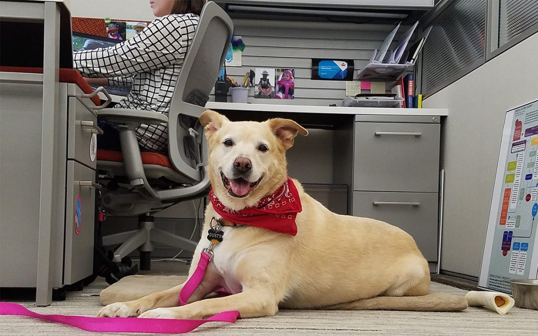 Take Your Dog to Work Day – June 21, 2019