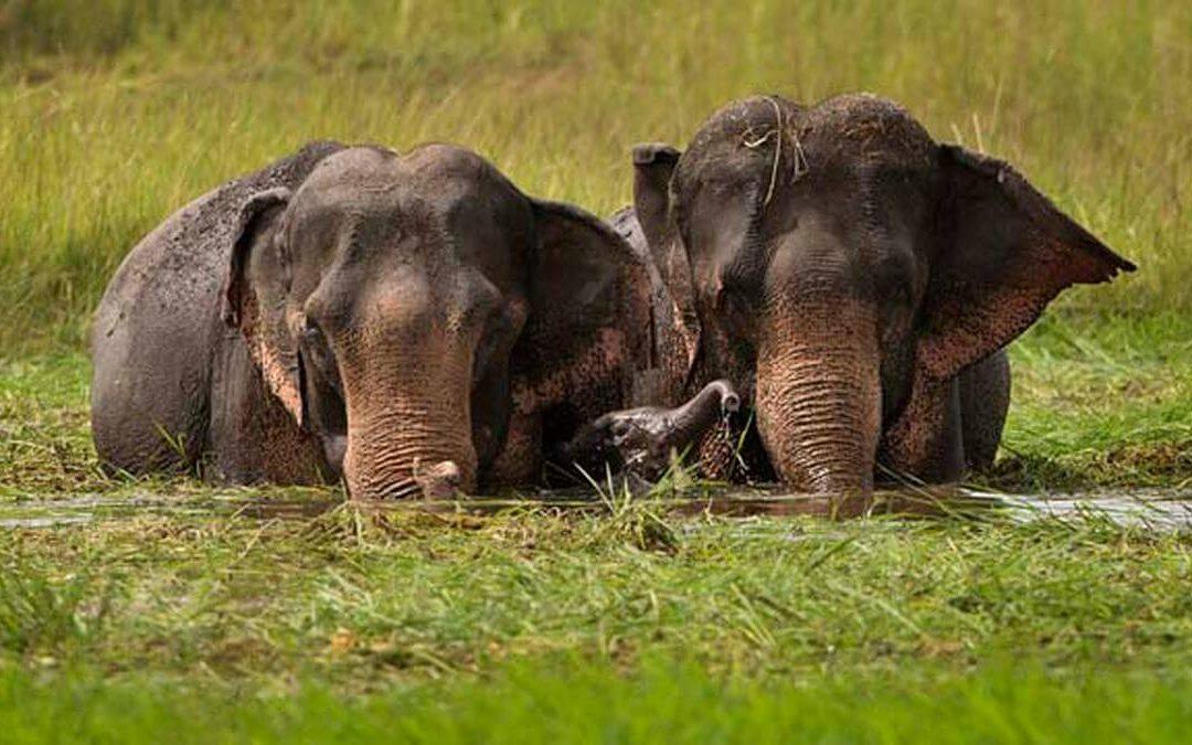 National Elephant Appreciation Day