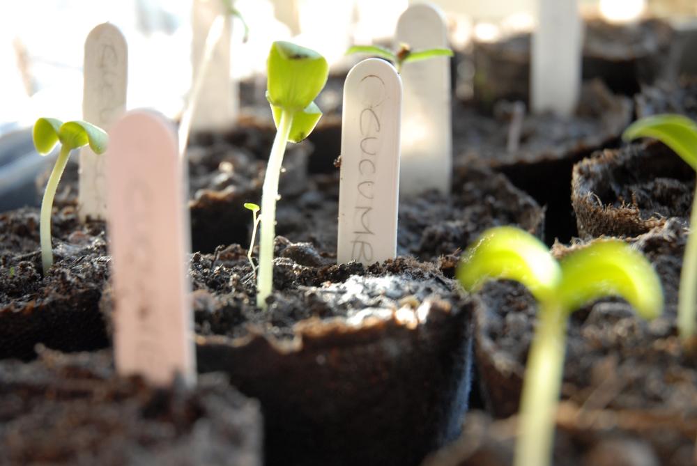National Seed Swap Day – January 25, 2020