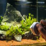 Clean Your Aquarium Day
