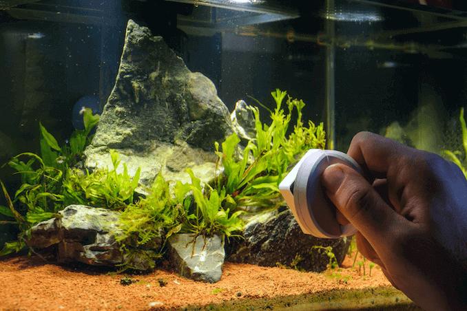 Clean Your Aquarium Day – June 18, 2020