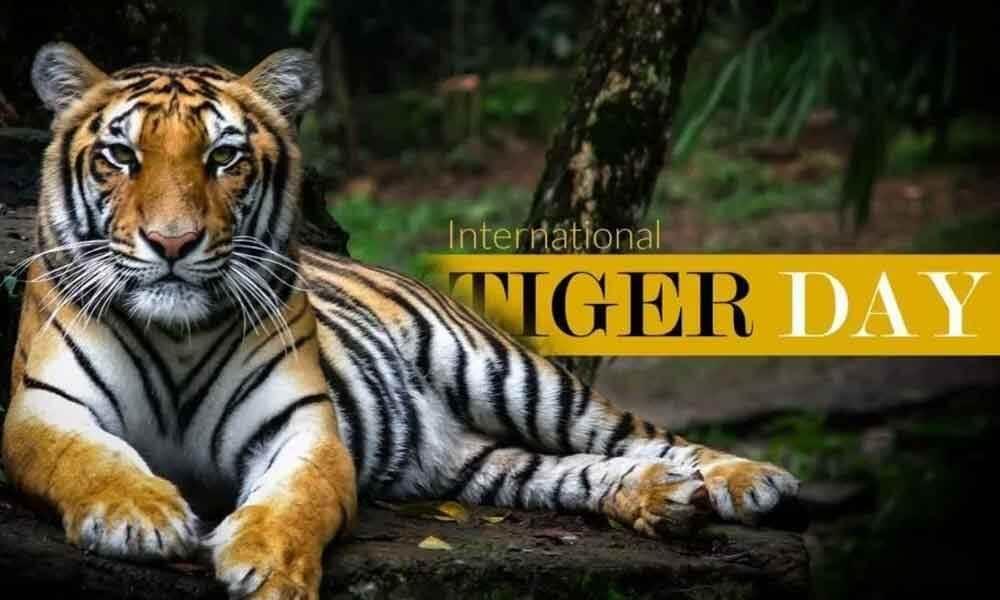 International Tiger Day – July 29, 2020