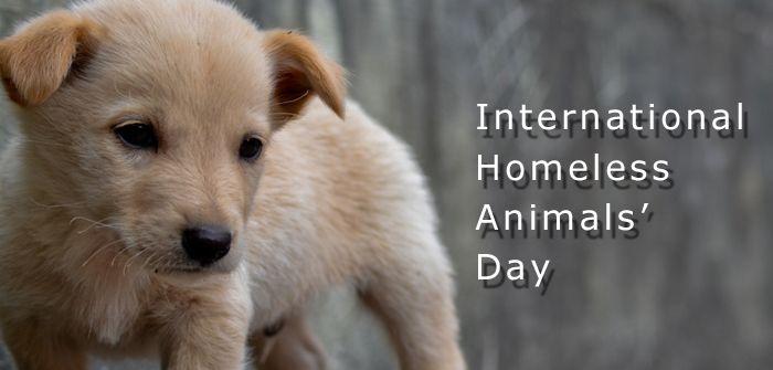International Homeless Animals Day – August 21, 2021