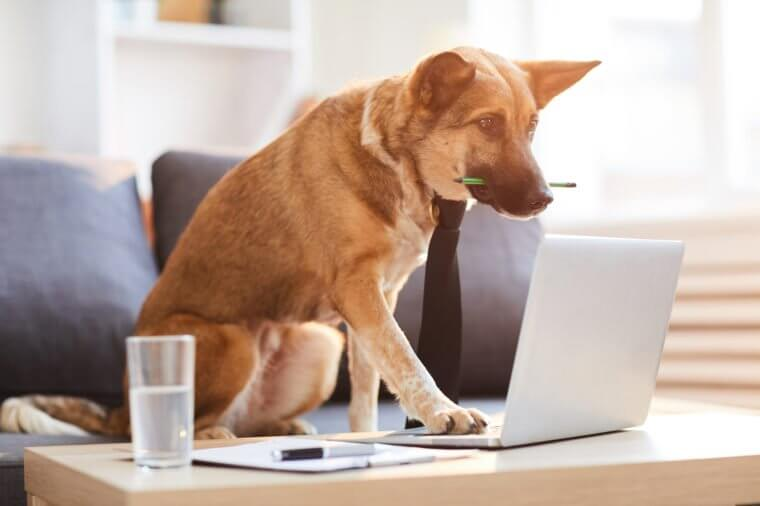Work Like a Dog Day – August 5, 2021