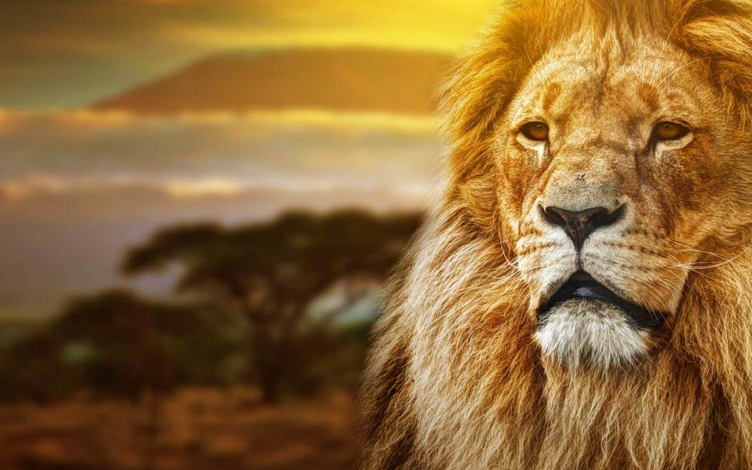 World Lion Day – August 10, 2021