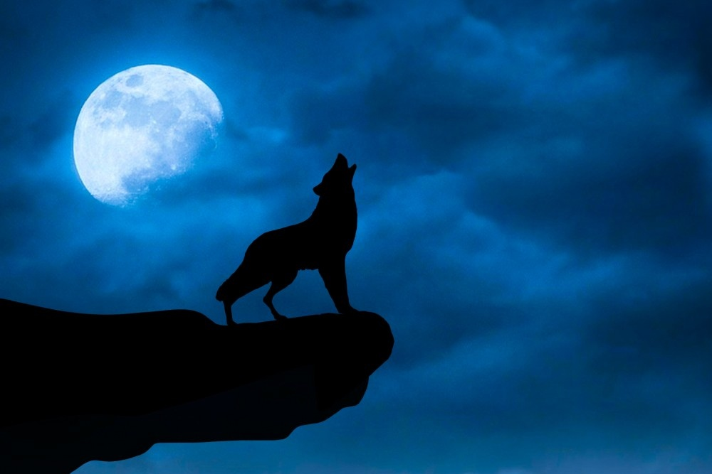 Howl At The Moon Day