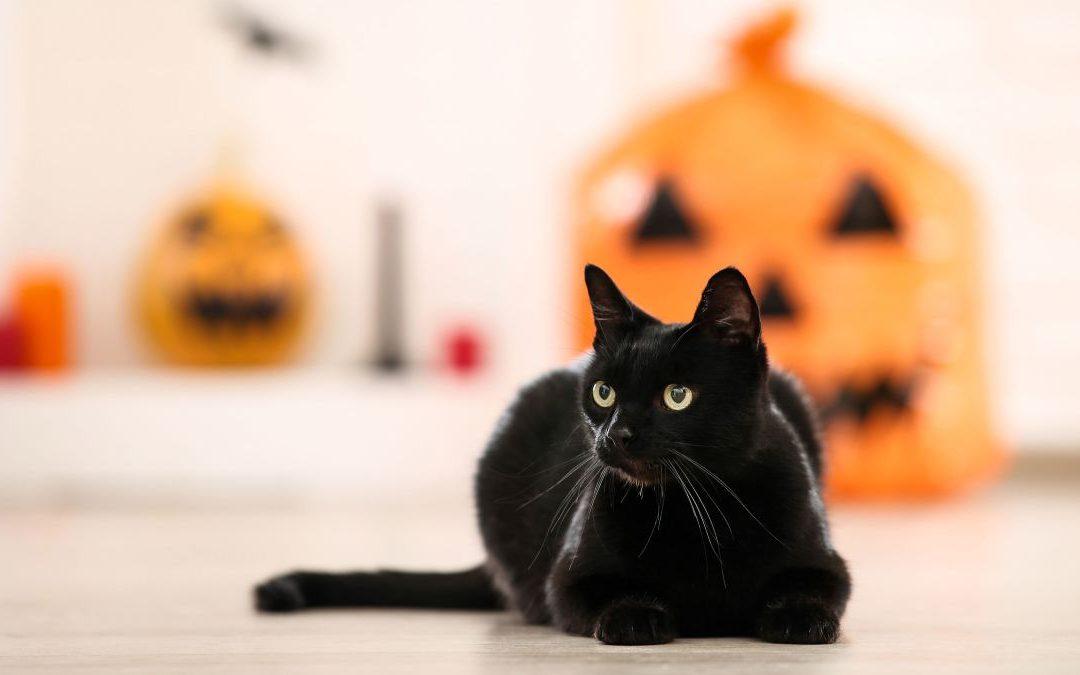 National Black Cat Day – October 27, 2020