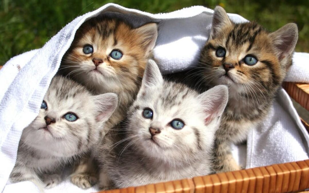 National Cat Herders Day