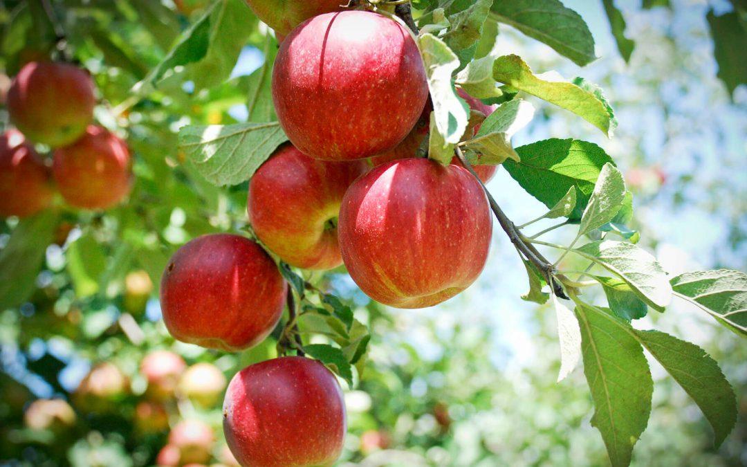 Apple Tree Day – January 6, 2021