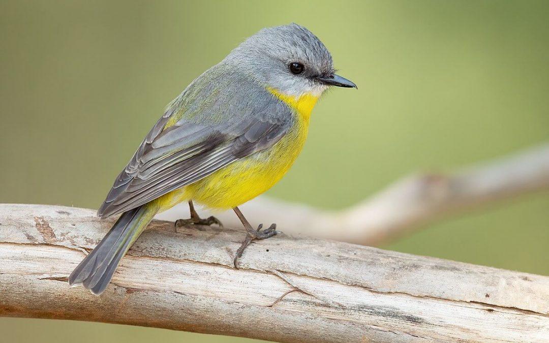 National Bird Day – January 5, 2021