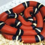 National Serpent Day