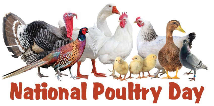 National Poultry Day – March 19, 2021