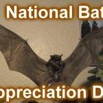 National Bat Appreciation Day