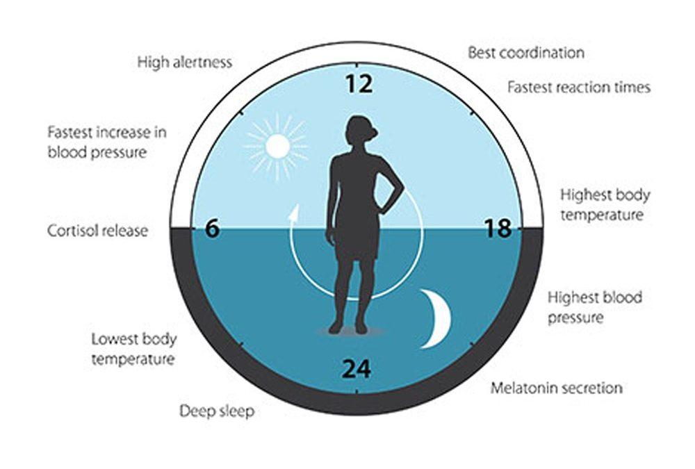 National Biological Clock Day – April 28, 2021