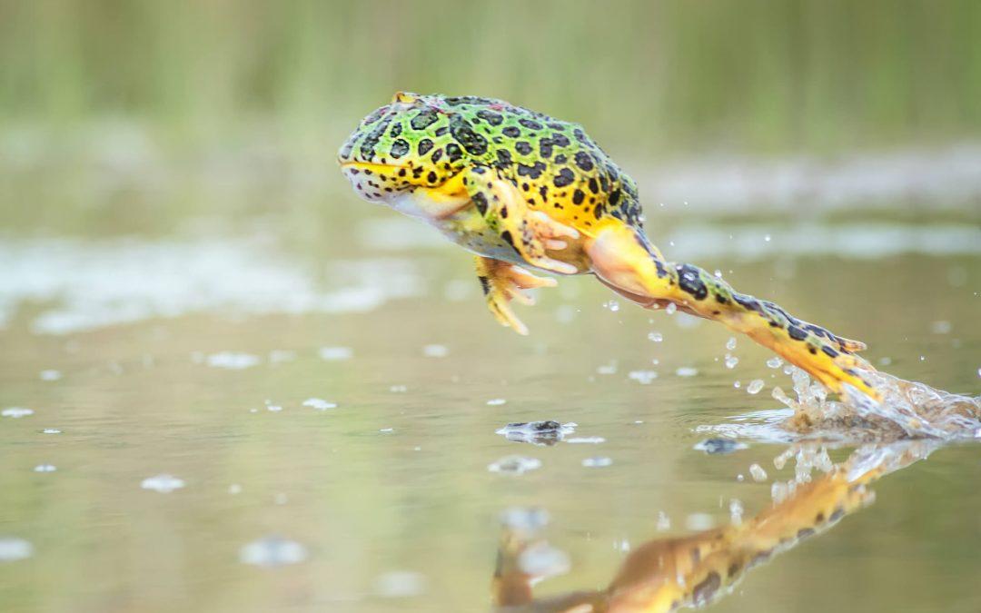 National Frog Jumping Day – May 13, 2021