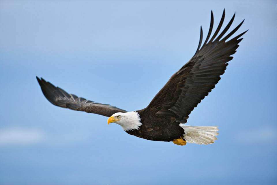 National American Eagle Day – June 20, 2020