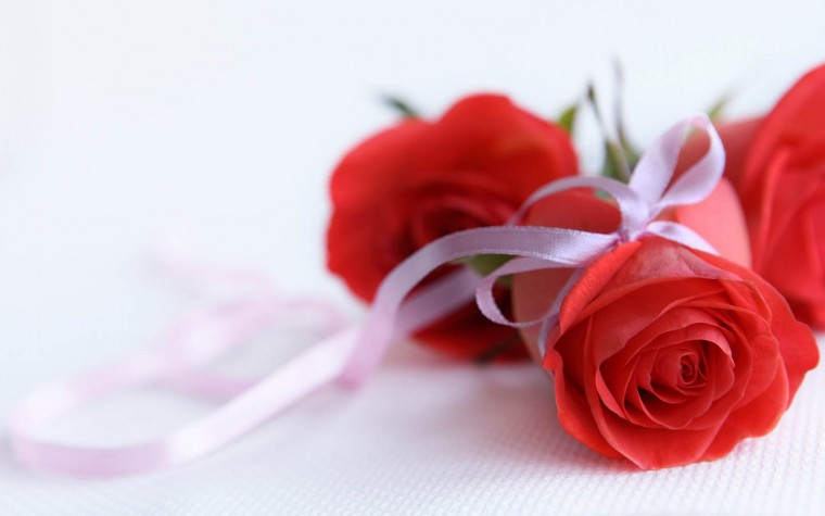 National Red Rose Day