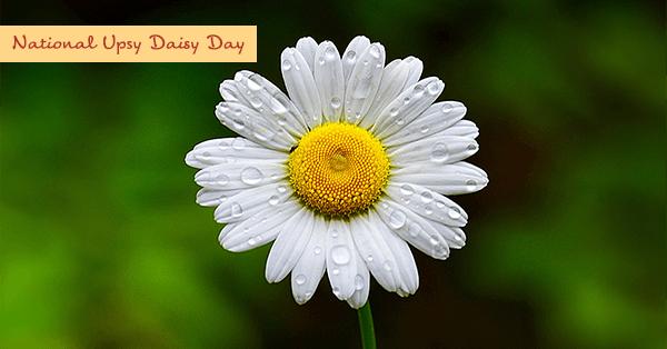 National Upsy Daisy Day – June 8, 2021