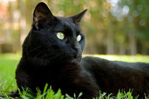Black Cat Appreciation Day – August 17, 2021