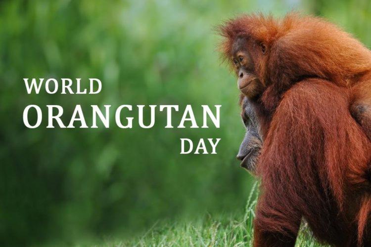 International Orangutan Day – August 19, 2021