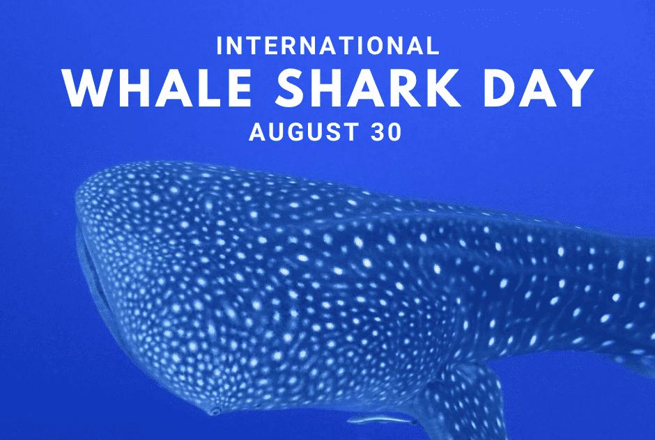 International Whale Shark Day – August 30, 2021